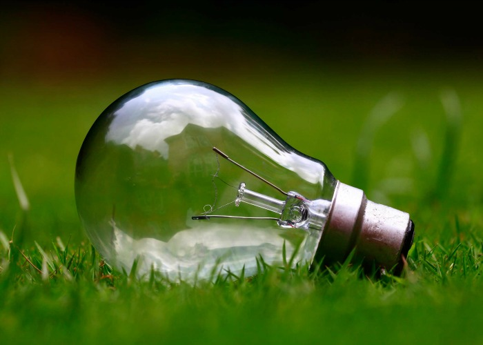 Lightbulb on grass