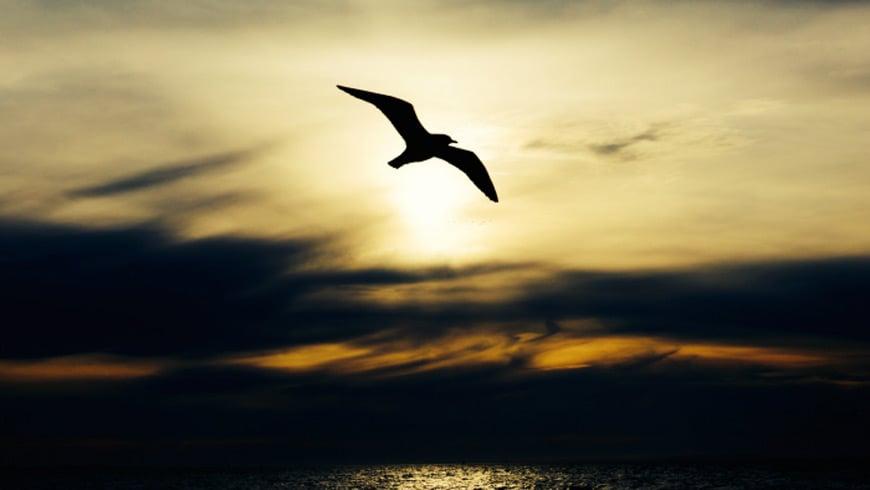 Soaring upwards with open innovation. A bird soaring.
