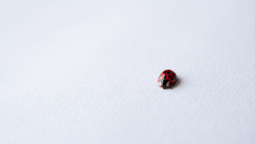 Making open innovation work for large and small. A ladybird.